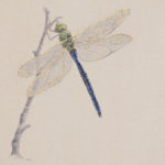 Dragonfly by Toni Watts