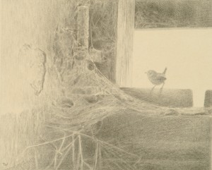 Silverpoint drawing of a wren
