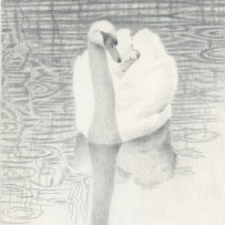 Silverpoint drawing of a swan