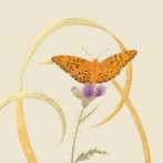 A painting of butterflies – The Fritillaries of Barkbooth Lot